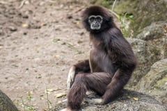 在台北市立动物园的猴子 免版税库存图片