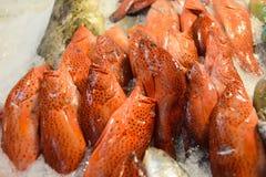 在台湾的海鱼 免版税库存图片