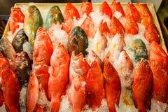 在台湾的海鱼 免版税库存照片