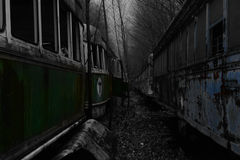 在台车坟园之间的颜色在森林 图库摄影