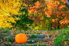 在台阶的橙色南瓜 库存照片