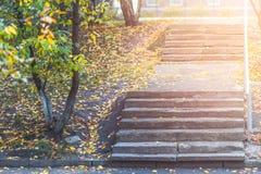 在台阶的湿五颜六色的秋天叶子 库存照片