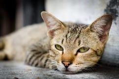 在台阶的特写镜头棕色猫面孔 库存照片