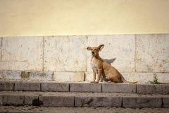 在台阶的狗 库存图片