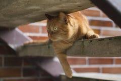 在台阶的猫 免版税库存图片