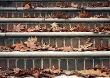 在台阶的秋叶 库存图片