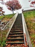 在台阶的红色叶子 库存图片