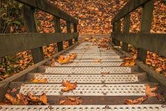 在台阶的落的叶子 库存照片