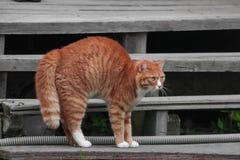 在台阶的邪恶的猫 库存照片