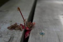 在台阶的死的花 库存照片