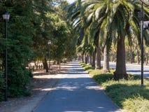 在史丹福大学的棕榈树被排行的校园边路 免版税库存图片