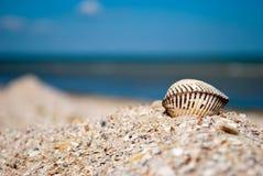 在右边的大白色美丽的闭合的贝壳在蓝色海沙夏天晴天背景  免版税库存照片