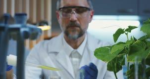 在叶子上的科学家落下的液体 影视素材