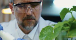 在叶子上的科学家落下的液体 股票录像