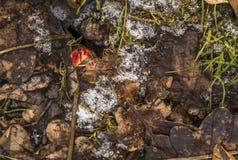 在叶子下的真菌 库存照片
