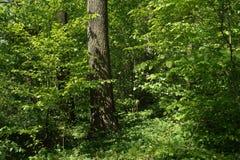 在叶子丛林的树干  免版税库存照片