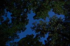 在叶子中的夜间在大烟山 免版税图库摄影