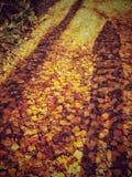 在叶子反射的Autum日落 免版税图库摄影