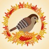 在叶子和束框架的麻雀花揪 免版税库存照片