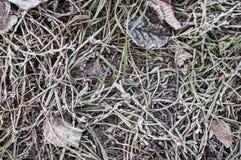 在叶子和草的树冰在早期的冬天 图库摄影