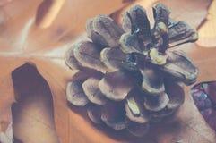 在叶子地毯,葡萄酒样式的针叶树锥体 库存照片