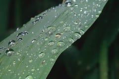 在叶子平衡的雨珠 免版税库存图片