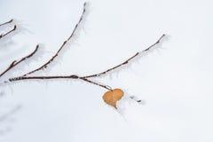 在叶子心脏的冬天霜 图库摄影