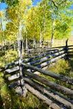 在叶子期间的黄色白杨木 免版税库存图片