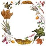 在叶子水彩的绘画在一个圈子在秋天安排了 免版税图库摄影