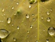 在叶子特写镜头的雨珠 免版税图库摄影