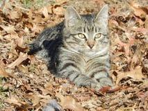 在叶子的一只猫 免版税库存图片