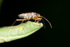 在叶子的一只甲虫 关闭 免版税库存图片