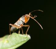 在叶子的一只甲虫 关闭 库存照片