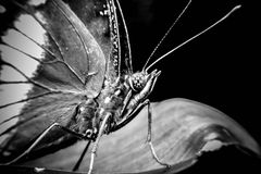 在叶子的一只美丽的蝴蝶 库存照片