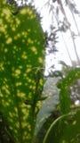 在叶子的一只蚂蚁 免版税图库摄影