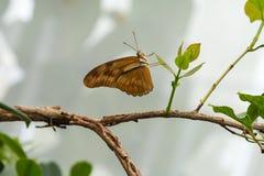 在叶子的一只蝴蝶 图库摄影