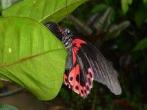 在叶子的一只蝴蝶 免版税库存照片