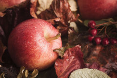 在叶子的下落的苹果 免版税库存图片
