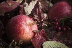 在叶子的下落的苹果 免版税库存照片