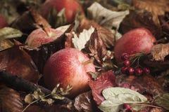 在叶子的下落的苹果 图库摄影