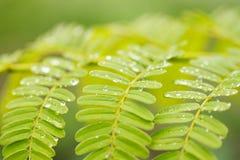 在叶子的下落水在雨以后 免版税库存图片