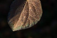 在叶子的下落 免版税库存照片