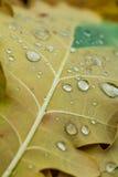 在叶子的下落 库存图片