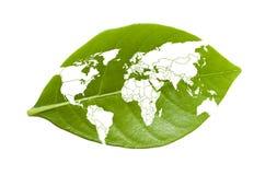 在叶子的世界地图 免版税库存照片