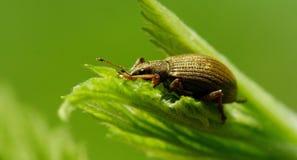 在叶子的五颜六色的甲虫 免版税库存图片