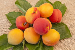 在叶子的可口杏子 库存图片
