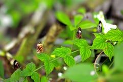 在叶子的四只蝴蝶 免版税库存图片