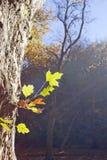 在叶子的太阳 免版税库存图片