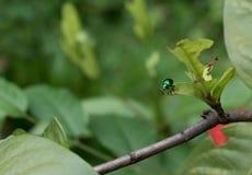 在叶子的小五颜六色的甲虫昆虫 免版税库存照片