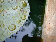 在叶子的小水滴 免版税库存照片